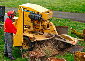 stump grinding portland or