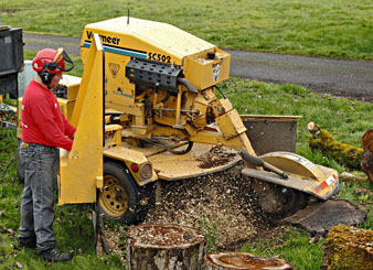 stump grinding is one type of tree services in portland oregon