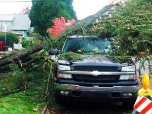 NW-Arbor-Tree-Car