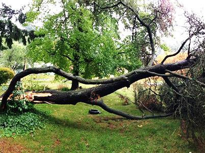 NWArbor-Tree-Falling