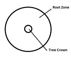 Tree-Crown-Distribution