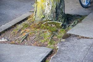 root-sidwalk-web