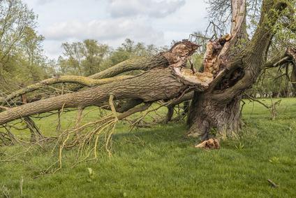 cracked and broken tree hazards