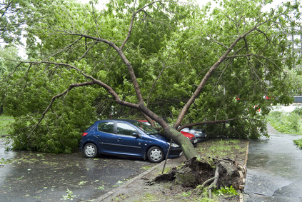tree hazard falling on car