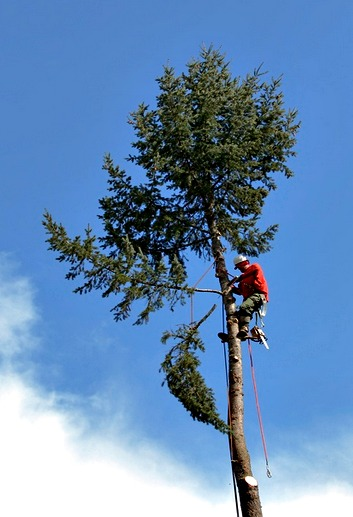 tree trimmer portland or