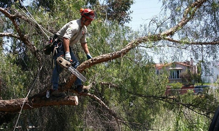 a tree pruner in portland oregon working on a tree with a chainsaw