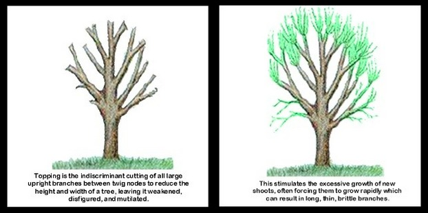 tree-topping-diagram