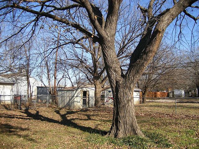 backyard large tree
