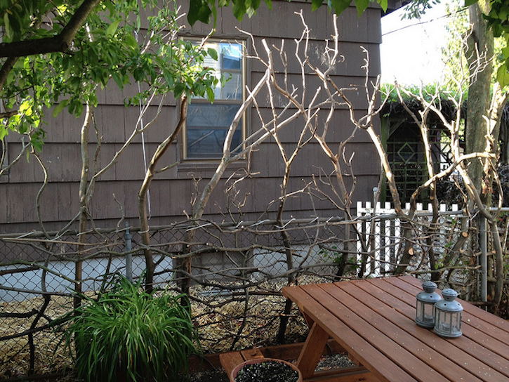 Ways to decorate with tree branches northwest arbor