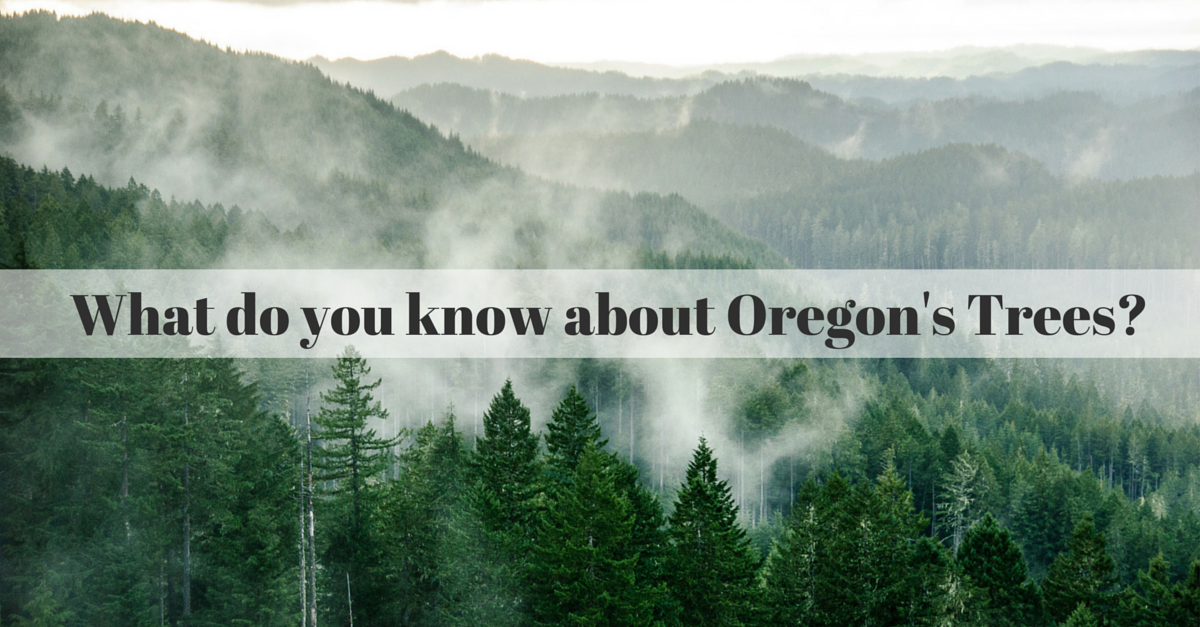 what do you know about oregon trees