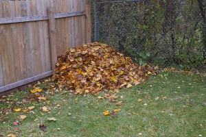 leaf-pile-by-fence