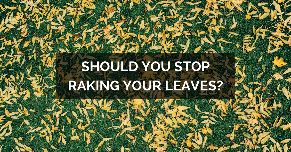 should you stop raking your leaves