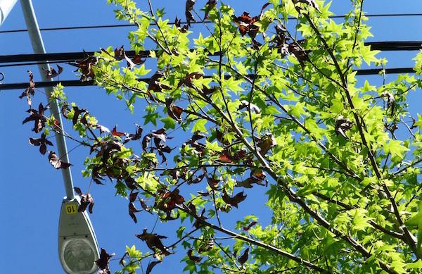 Electric Tree