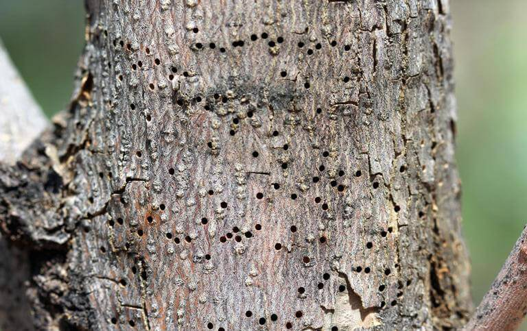 insects in dying tree