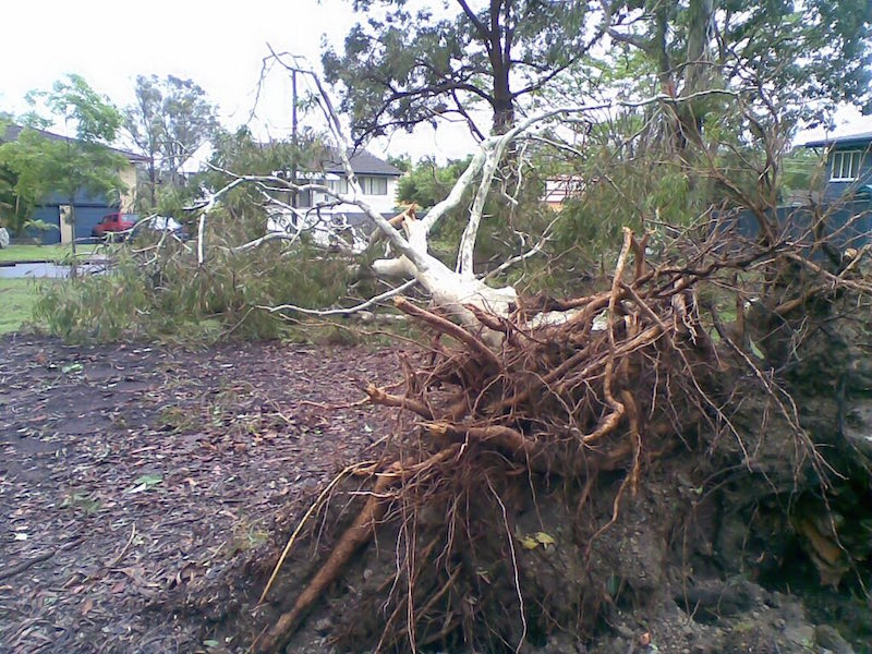 Tree Root Damage