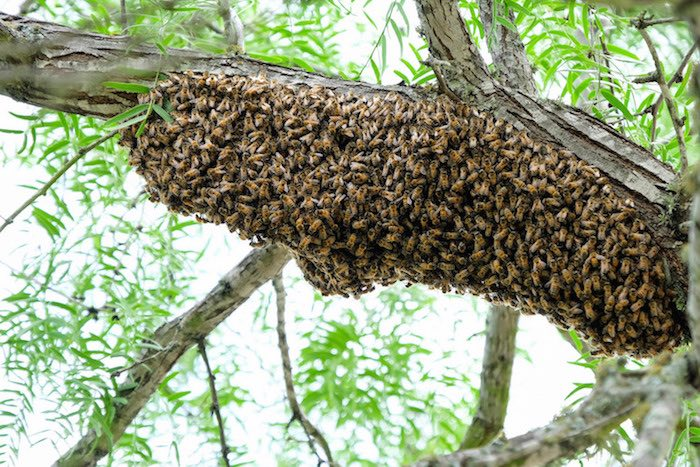 Bees in Trees!