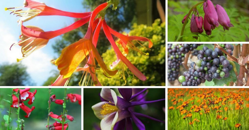 Plants to Attract Hummingbird