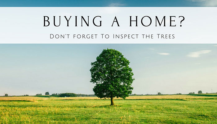Buying A Home Don T Forget To Inspect The Trees