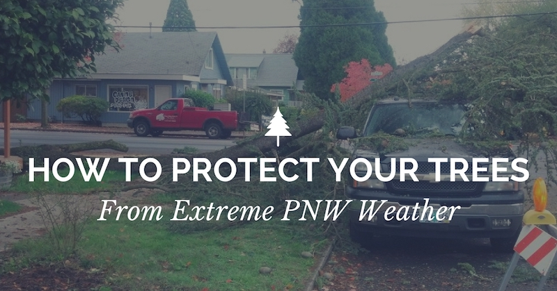 How to protect your trees from extreme weather