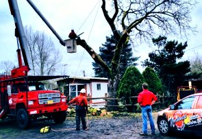 tree removal portland or