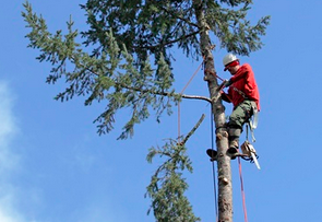 tree trimming and pruning portland or