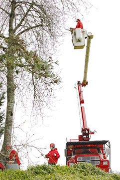 tree trimming in portland or from bucket truck