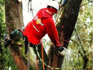 NW-Arbor-Chain-Saw-Tree