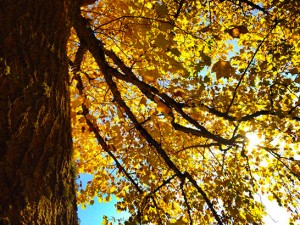 NW-Arbor-Tree