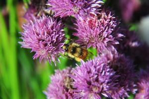 Bee Garden Portland NW Arbor