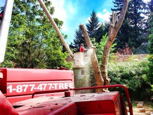 NW-Tree-Boom-Lift-Saw