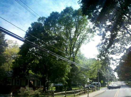 tree-topped-cut-power-line