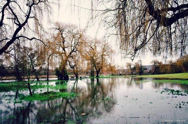 trees-river-flooding-moss
