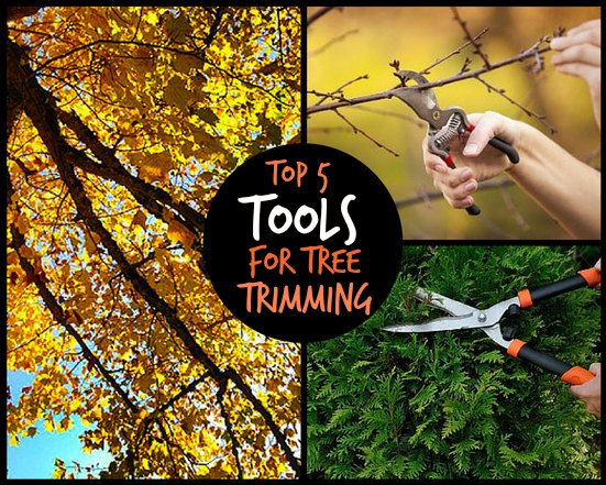 best tools for tree trimming pruning