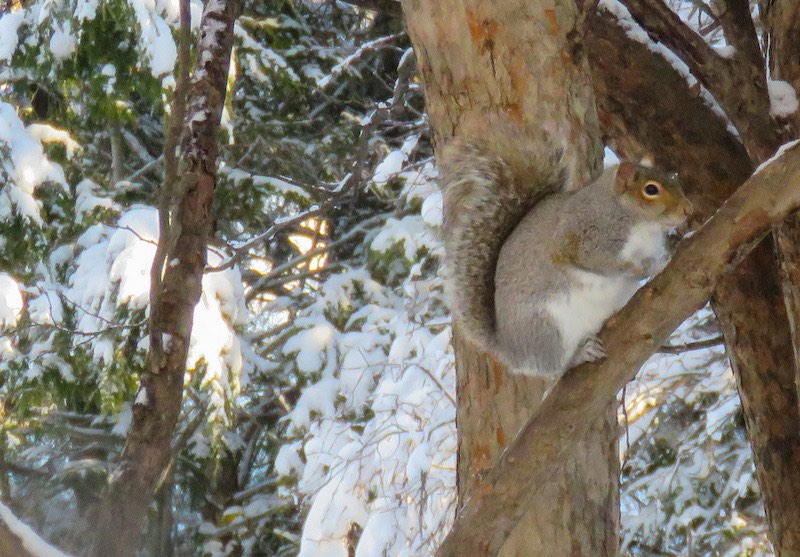 Squirrel Living in a Tree