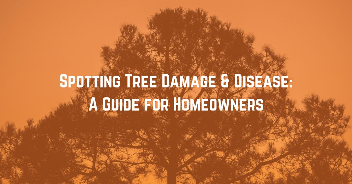 Common causes of tree damage and disease
