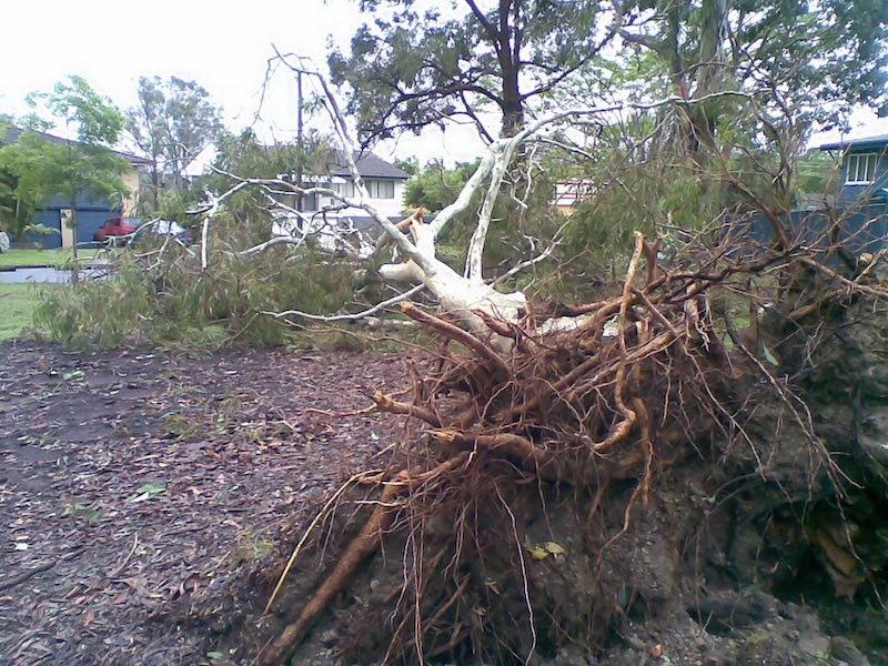 Tree Root Damage