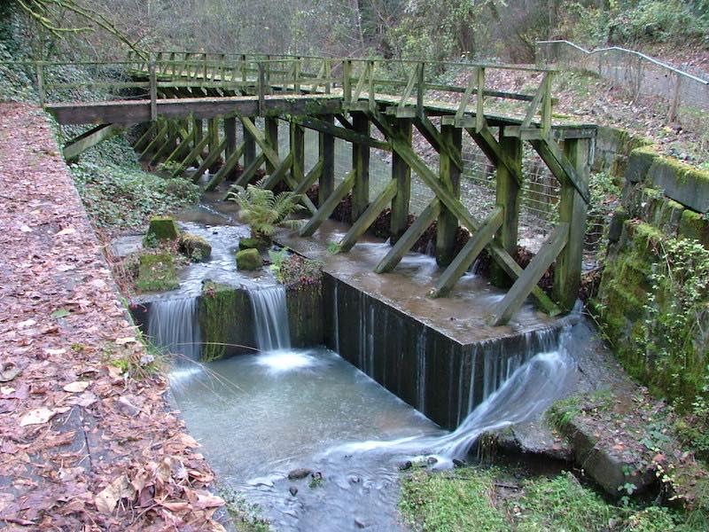 Blach Creek in Forest Park Portland