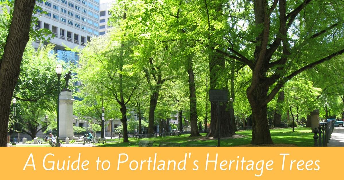 Guide to Portland's Heritage Trees